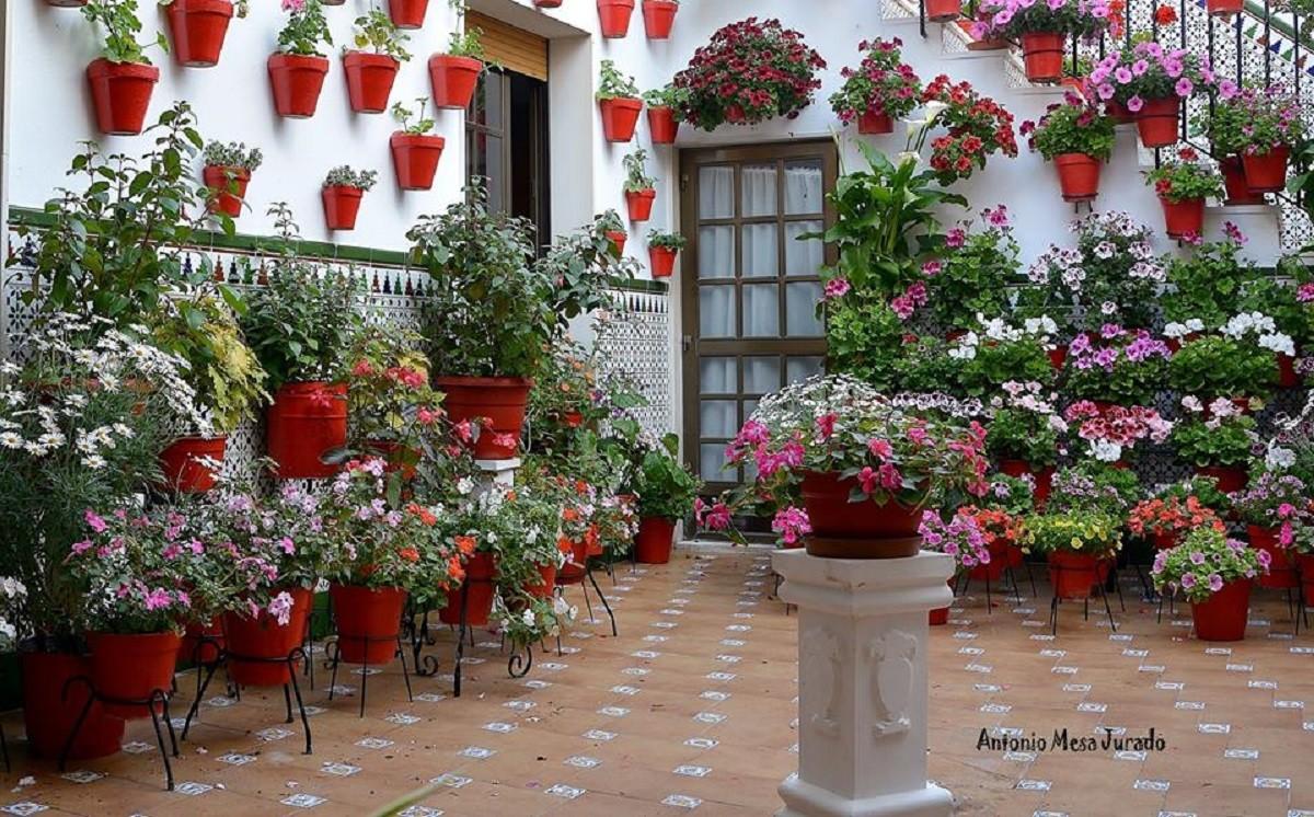 Patio Andaluz Por Antonio Mesa Ju Fotografia Turismo De Observacion